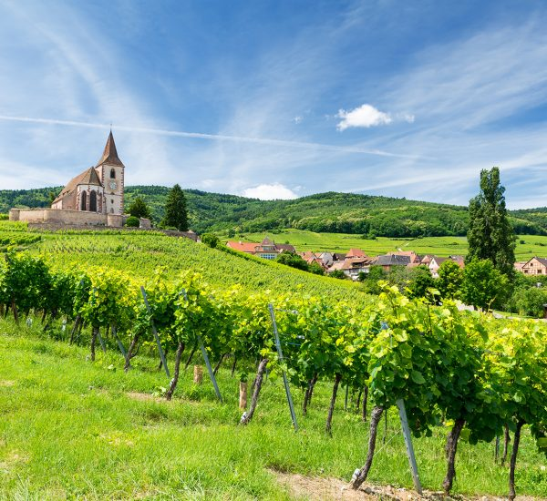 old church and vineyards in Hunawihr village in Alsace, France