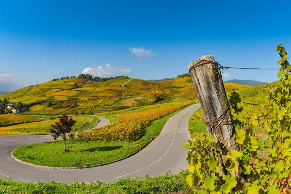 Wine Road, Vineyards of Alsace in France, Europe